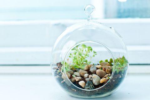 A miniature rock garden terrarium with small succulents.