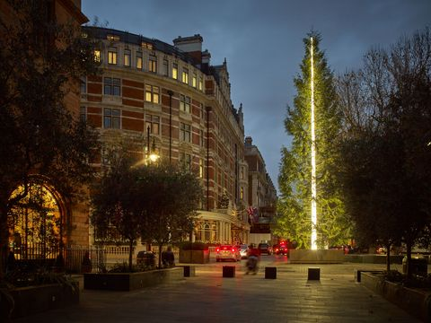 The Connaught Christmas Tree 2016 by Antony Gormley unveiled in Mayfair
