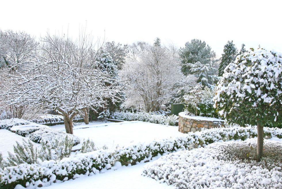 Beautiful Winter Garden With Snow