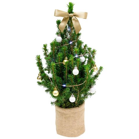 Christmas Tree Near Me.This Real Christmas Tree Fits Through Your Letterbox