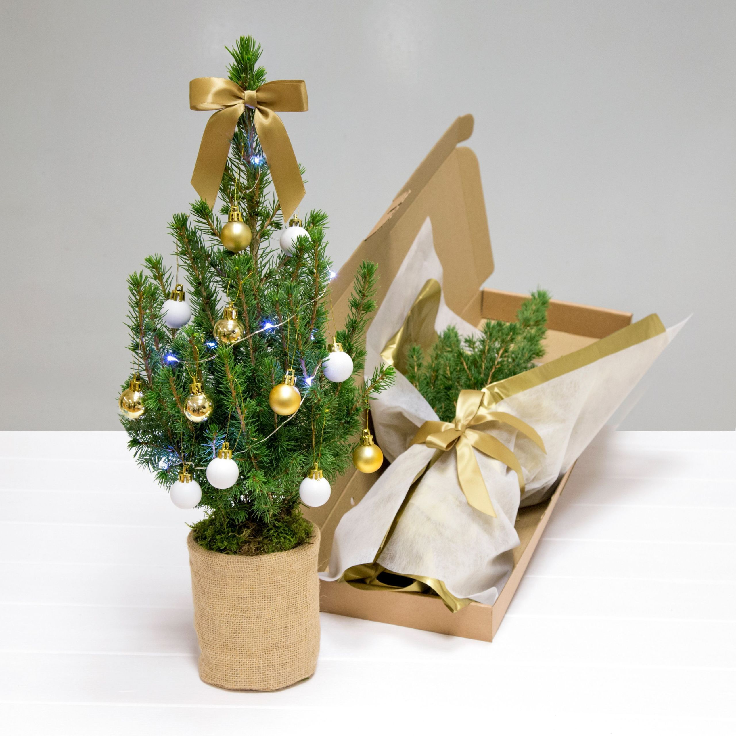 This real Christmas tree fits through your letterbox