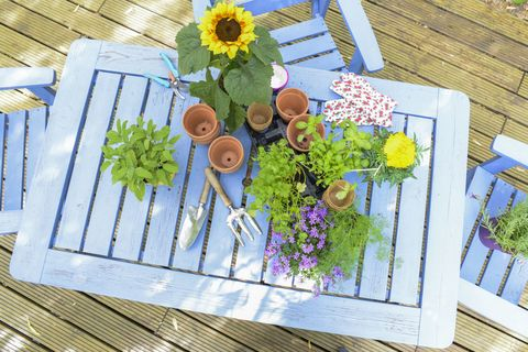 Garden table with flowers and spices