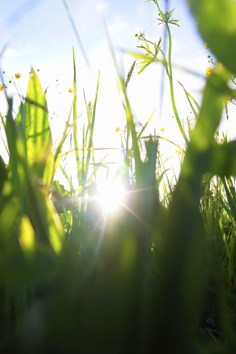 Grass in garden with the sun beaming