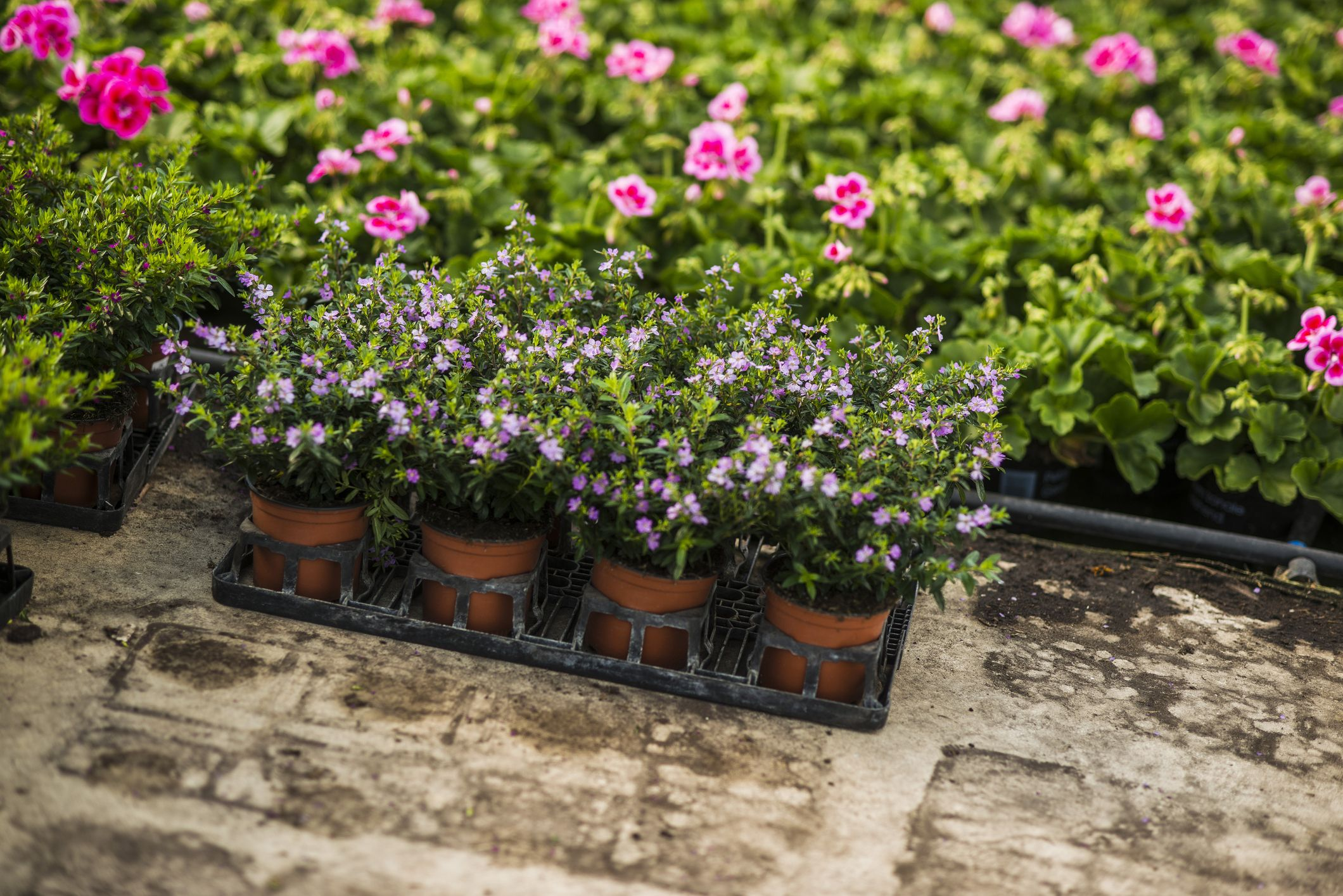 Best Places To Buy Plants For Garden Without Spending A Fortune