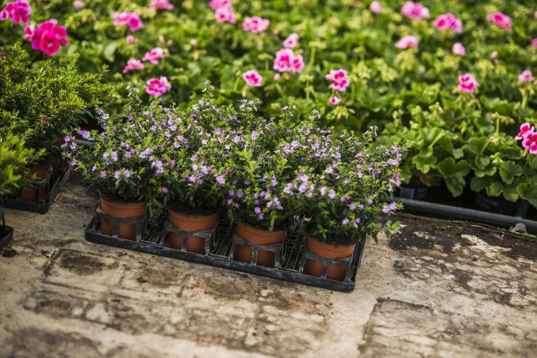 Best places to buy plants for garden without spending a fortune flowers in a nursery mightylinksfo