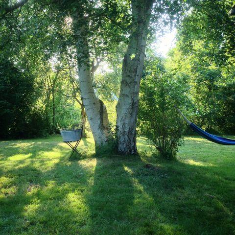 Big tree in garden