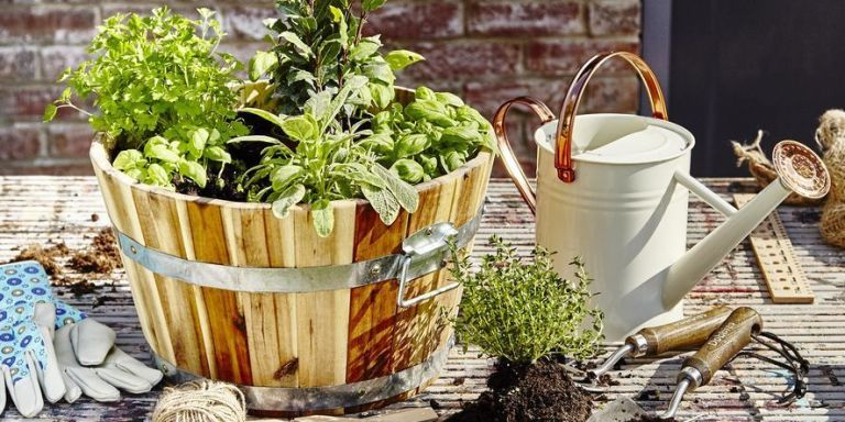 Gardening in March: everything you need to do