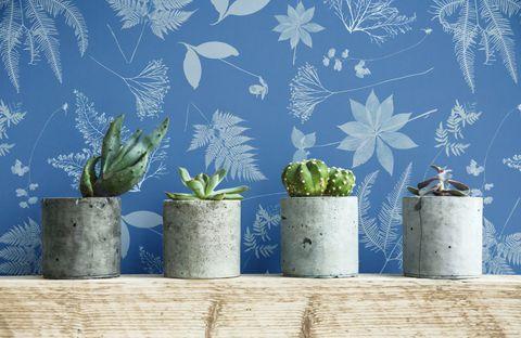 Anna Atkins Cyanotype Floral Leaf Wall Mural, £25 per square metre via Murals Wallpaper.