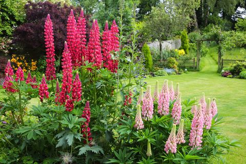 Flowers In English Garden