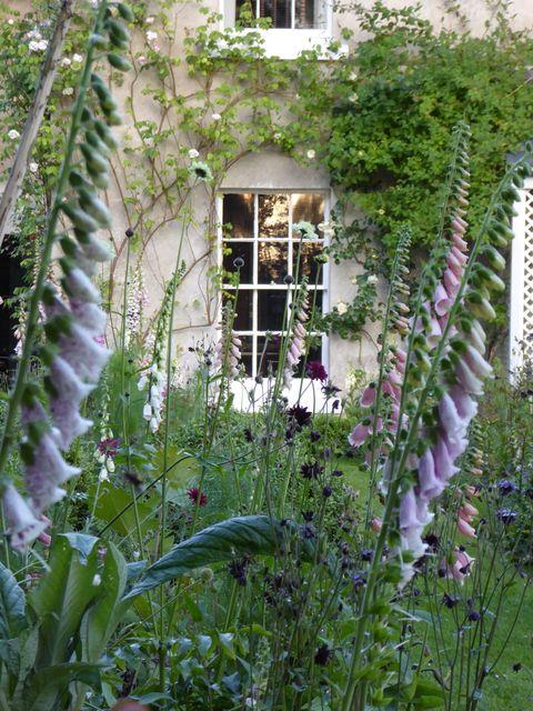 Flower, Plant, Digitalis, Garden, Botany, House, Spring, Building, Shrub, Architecture,