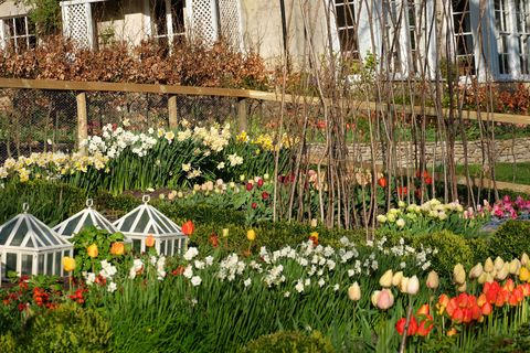 Flower, Garden, Plant, Spring, Botany, Grass, Flowering plant, Floristry, Tulip, Greenhouse,