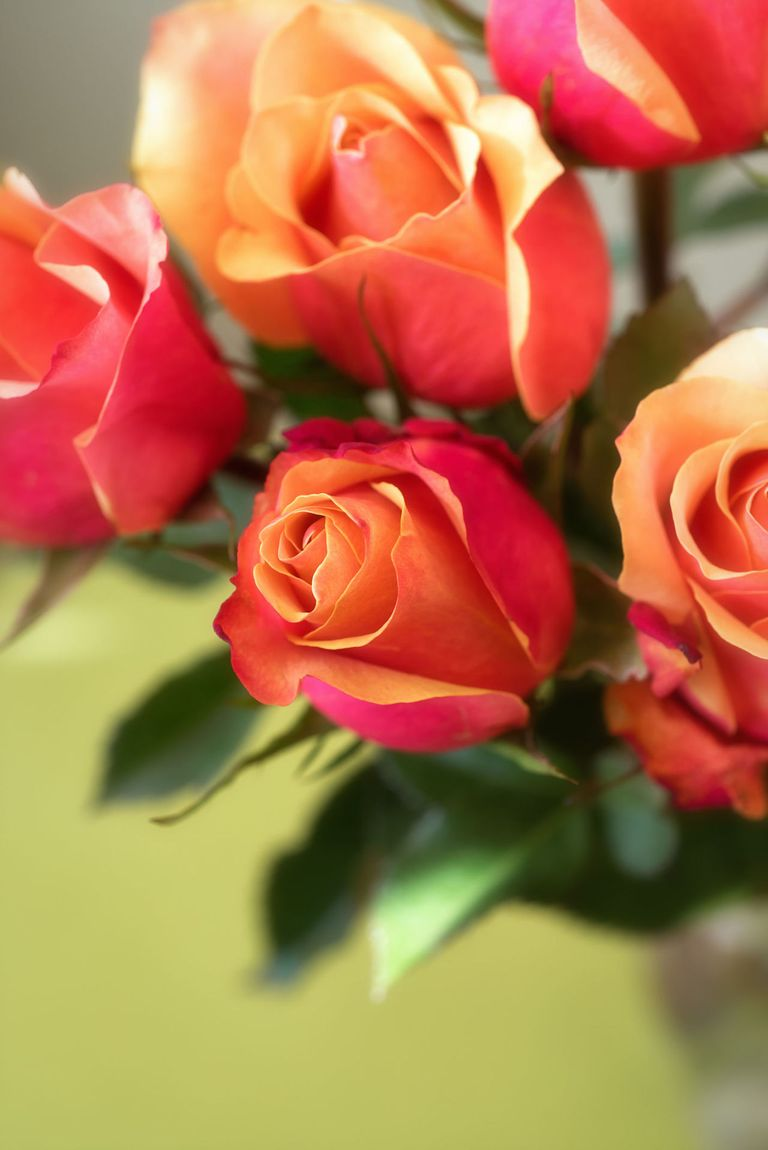 Your guide to choosing flowers this Mother\'s Day: how to pick the ...