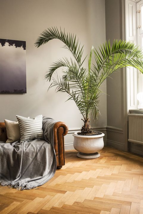 Nina Kullberg - lagom interior-  palm tree living room
