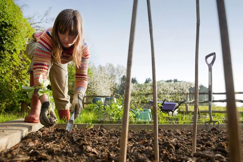 Working in a Veg Garden