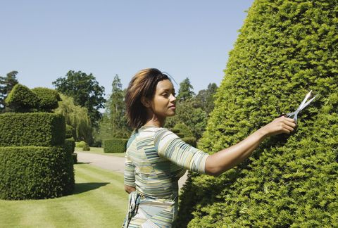 Woman trimming garden hedge
