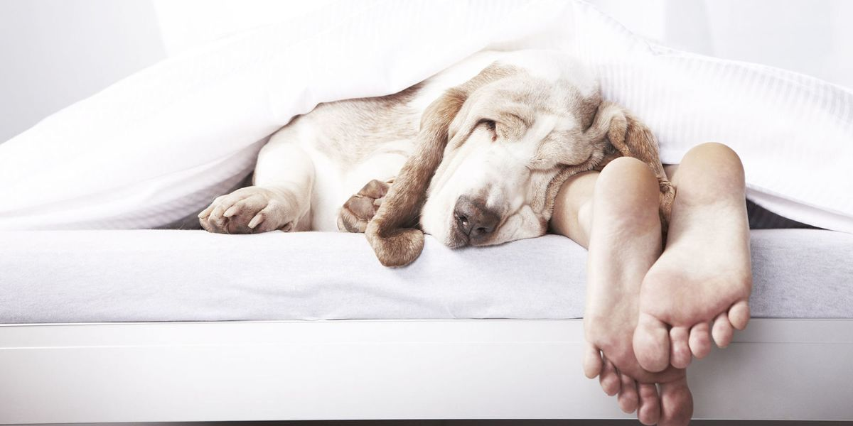 Why you should never let your pet into your bed
