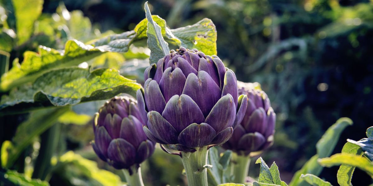 8 edible plants to add to your planting scheme this spring