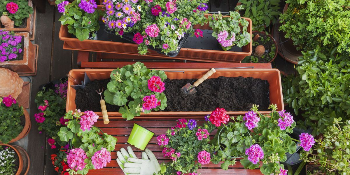 What are the best plants for patio containers and windowboxes?