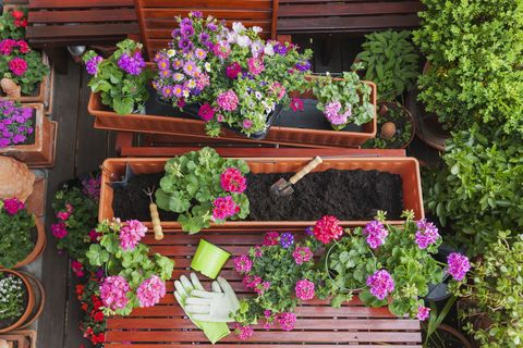 What are the best plants for patio containers and windowboxes this gardening different spring and summer flowers flower box and gardening tools on garden table mightylinksfo