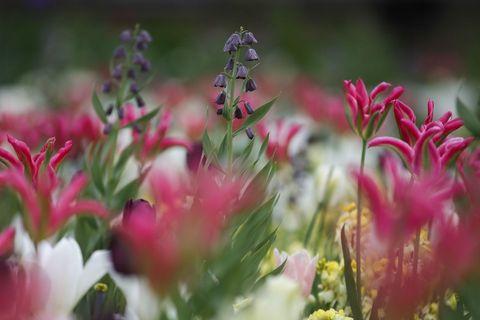 princess-dianas-garden