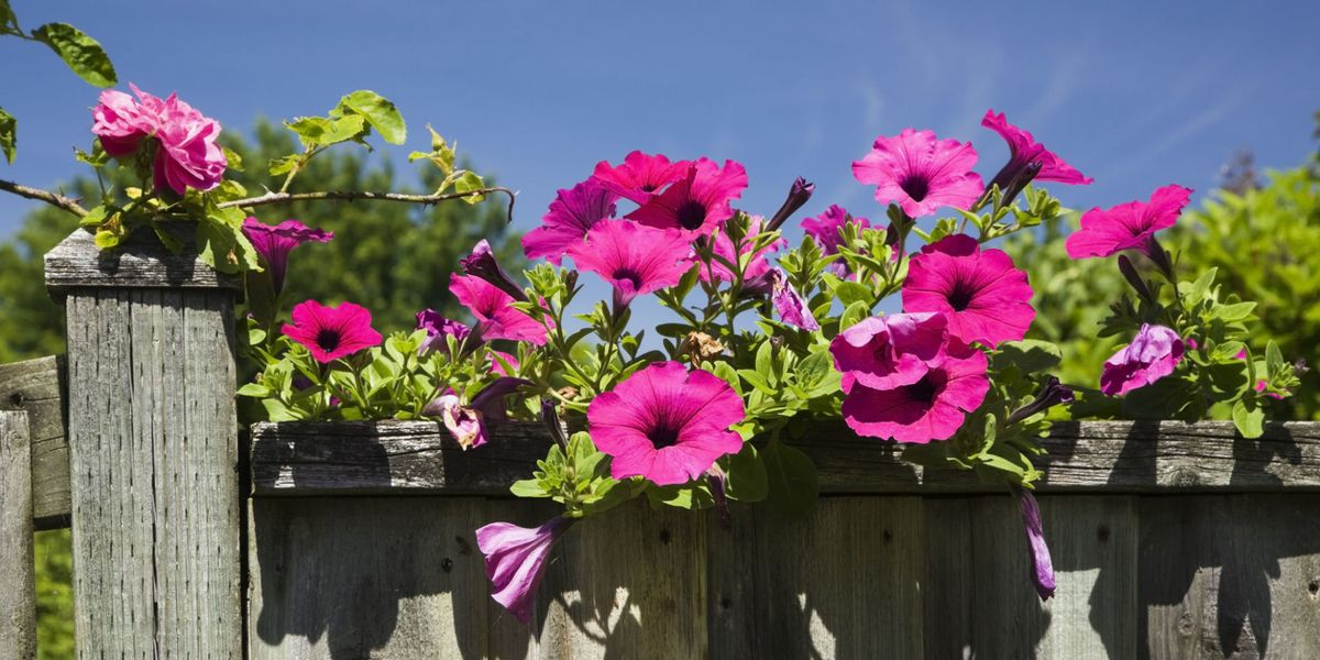 Top tips for adding colour to your garden