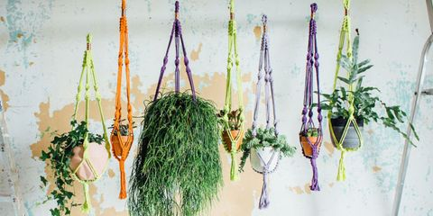 MAKE A MACRAMÉ PLANT HANGER - Living with Plants by Sophie Lee