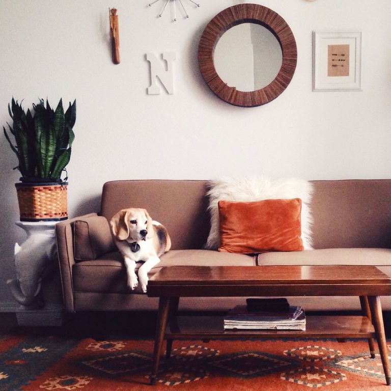 9 Tips To Keep Your House Super Clean With Pets