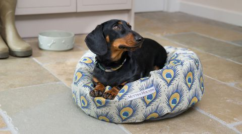 M&H Donut Dog Bed, Peacock Print