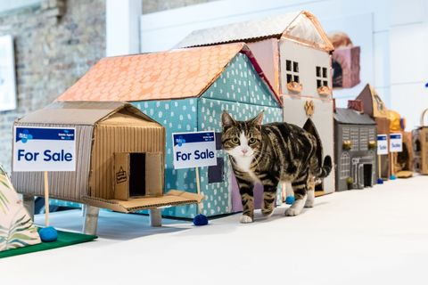 Blue Cross Launches First Ever Estate Agents for Cats