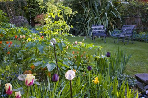 Gardening in May - Garden Jobs For May