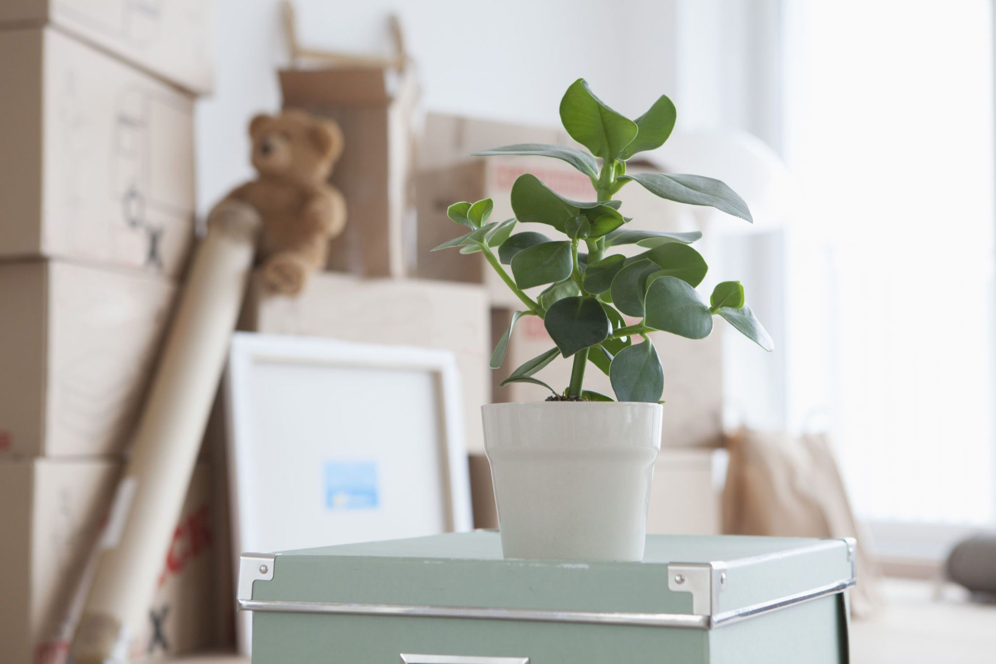 Piled cardboard boxes in flat potted plant in foreground & It takes first-time buyers five months to make a house a home