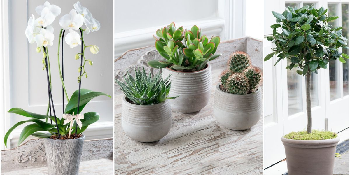 Inject some greenery into your home with these fabulous potted plants