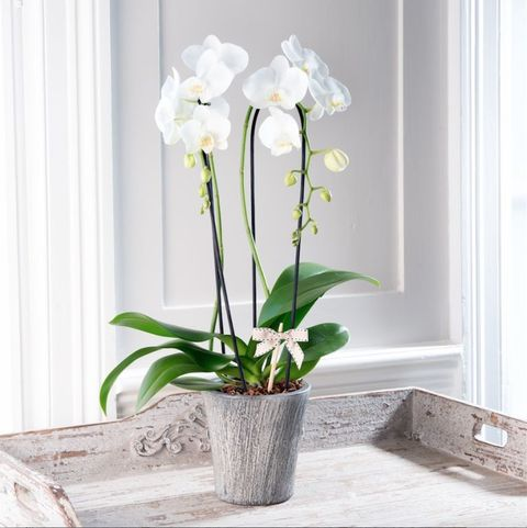 Stylish Potted Plants From The House Beautiful Collection At Flowers