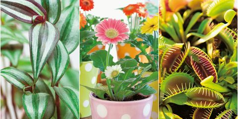at home with plants by ian drummon and kara o'reilly   plants for children's spaces