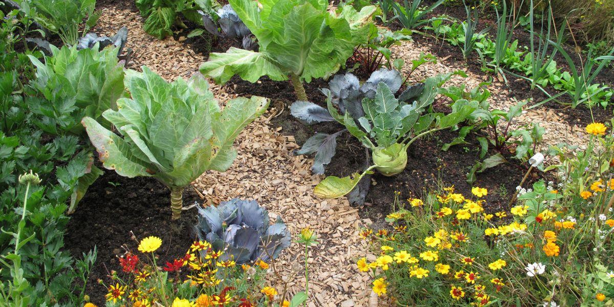 Kitchen gardens: 12 ways to reap the benefits
