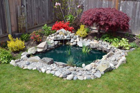 Garden pond - water feature