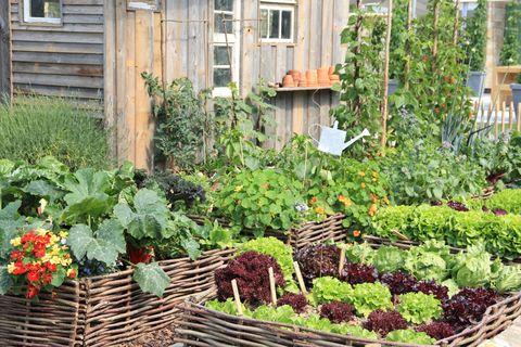 Kitchen Gardens 12 Ways To Reap The Benefits