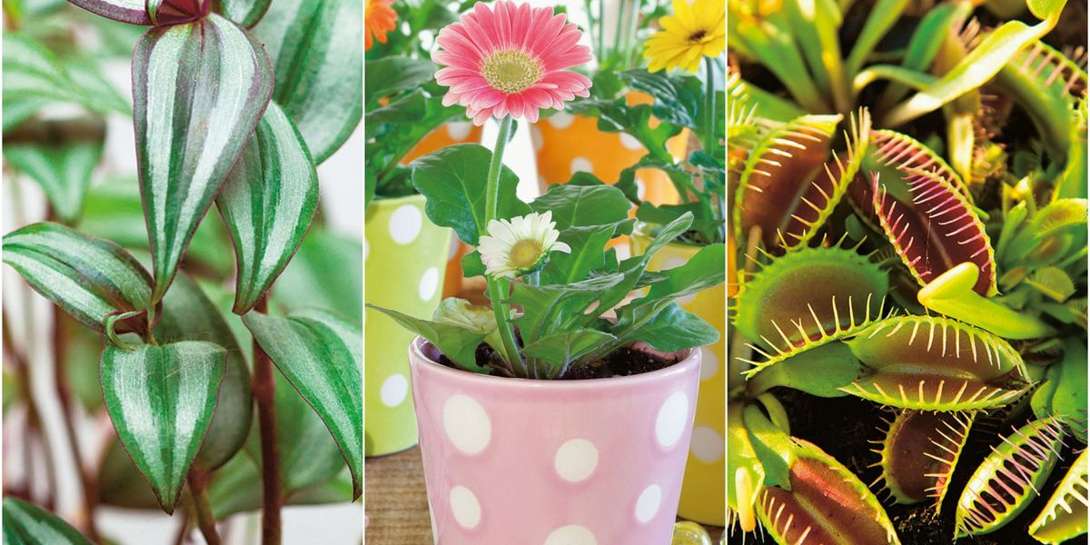 12 of the best plants for children's bedrooms