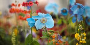 Preview Day Of The 2017 Chelsea Flower Show