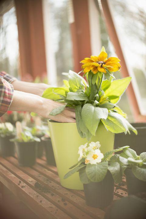 Gardening For Beginners Charlie