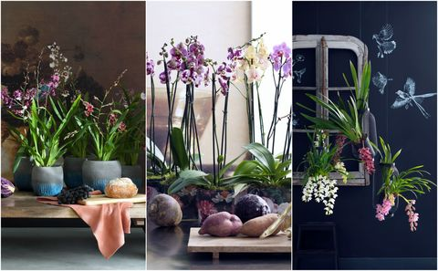 Orchids - Harmonise trend