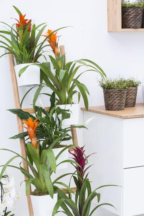 ikea and indoor garden design co created a display at the rhs chelsea flower - Indoor Garden