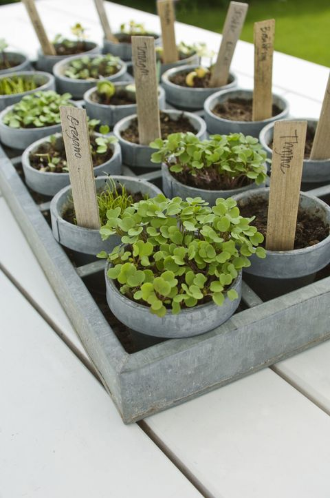 Tray of mixed seedlings in pots