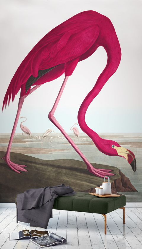 Pink Flamingo The Audubon Collection Birds Murals Wallpaper Ilrations By J