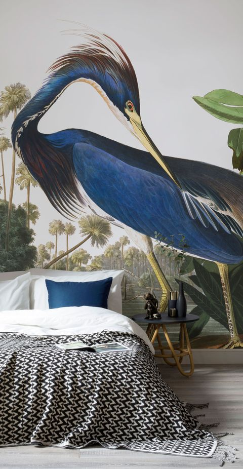 The Audubon Collection - birds - Murals Wallpaper. Illustrations by J.J. Audubon, The Birds of America