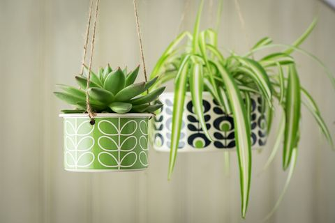 15 Best Indoor Hanging Planters