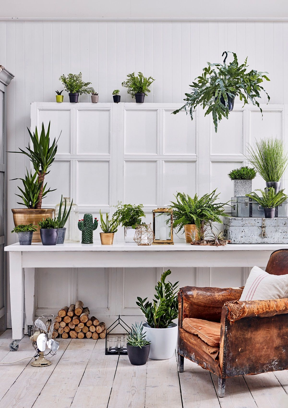How To Create A Houseplant Haven – 4 Care And Maintenance Tips