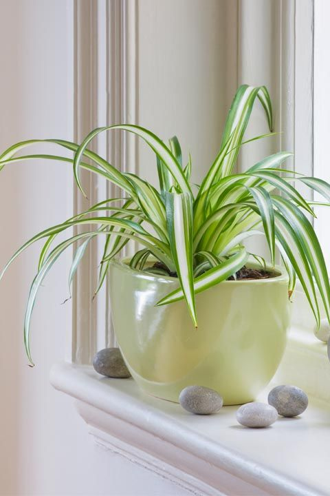 plants for your zodiac sign