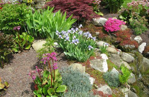 Colourful rock garden