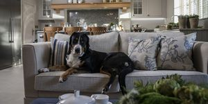 Pet-friendly home: Alexander James Interior Design